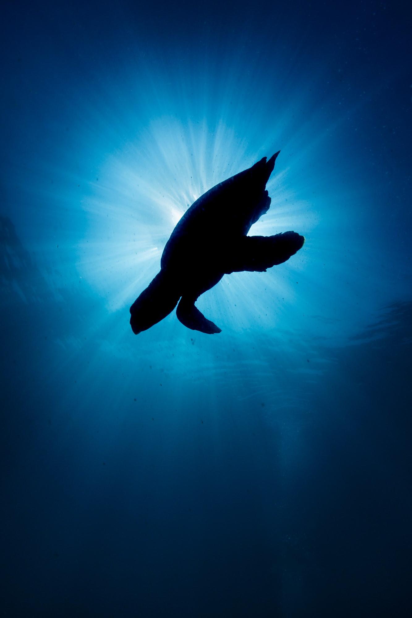 (c) The Ocean Agency / Grant Thomas