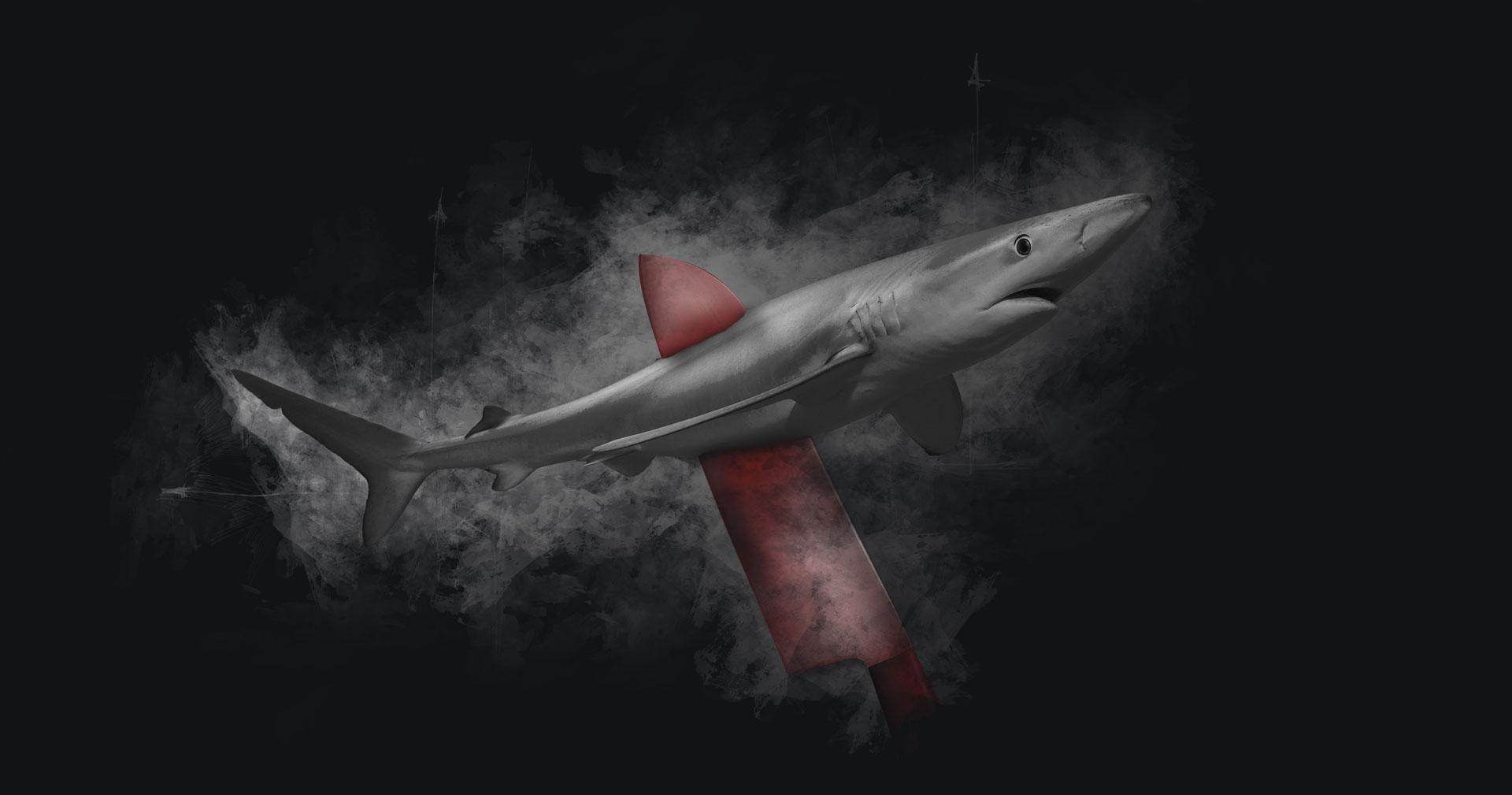 Dekoratives Bild: Blauhai auf Messer aufgespießt