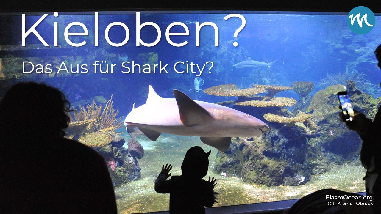 """Dekoratives Bild: Großaquarium mit eingeblendetem Text """"Kieloben? Das Aus für Shark City"""""""