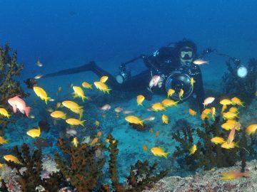 Dekoratives Bild: Taucher am Riff mit vielen bunten Fischen