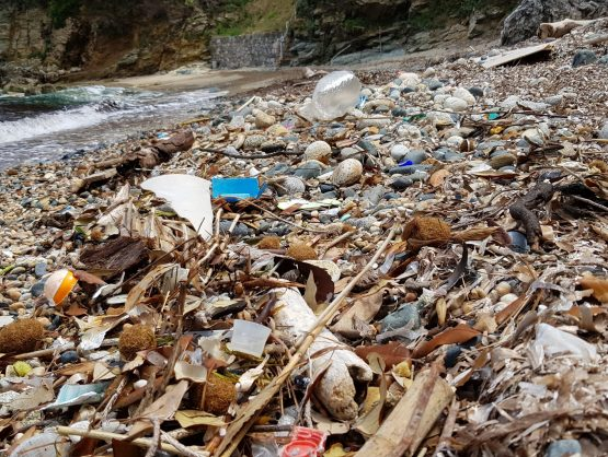 Dekoratives Bild: Am Strand angeschwemmtes Treibgut, organisch und künstlich