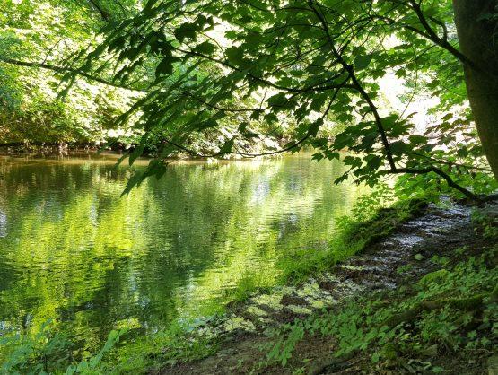 Dekoratives Bild: Grüner Wald an einem ruhigen Fluss